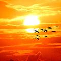 Sunrise / Sunset / Sandhill Cranes by W Gilroy