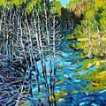 Sunrise Swamp by Phil Chadwick