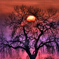 Sunrise Through The Foggy Tree by Scott Mahon