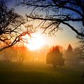 Sunrise Through Trees by Donald  Erickson