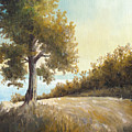 Sunrise Tree Plein Air by Douglas Castleman