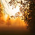 Sunrise Trees Fog by Donald  Erickson