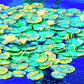 Sunrise Waterlilies by Dominic Piperata