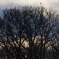 Sunrise With Bird by Steven Natanson
