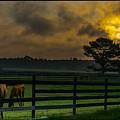 Sunrise With Horses by James Hennis