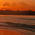 Sunrise With Seagull by Steven Natanson