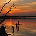 Sunset And Heron by Angel Cher