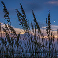 Sunset And Moonrise Over The Ocean by Janet Barnes