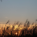 Sunset And Palm Grass by Laura Martin