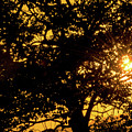 Sunset And Trees - San Salvador I by Totto Ponce