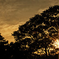 Sunset And Trees - San Salvador by Totto Ponce