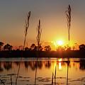 Sunset At Gator Hole 3 by Arthur Dodd