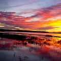 Sunset At Myakka River State Park, Florida by Felix Lai