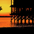 Sunset At Raft With Bird by Mar Nie