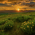 Sunset At Steptoe Butte by Francisco Gomez