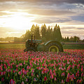 Sunset At The Tulip Farm by James Udall