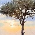 Sunset Behind Acacia Tree Digital Watercolor by Janet Ogren