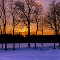 Sunset Behind The Trees by Rima Biswas