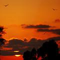 Sunset Birds by Jill Reger