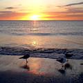 Sunset Birds by Phil Bishop