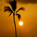 Sunset Coconut Palm Maui Hawaii by Pierre Leclerc Photography