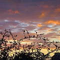 Sunset Colors To The West by Betty Buller Whitehead