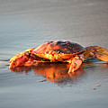 Sunset Crab by Denise Bruchman