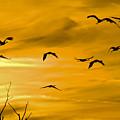 Sunset Fliers by Wanda Krack