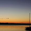 Sunset Flight by Susan Vineyard