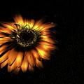Sunset Flower by Bob Welch