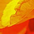 Sunset Flower by Michael Cinnamond