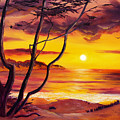 Sunset From A Carmel Cypress Tree  by Laura Iverson