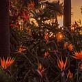 Sunset Garden by Livia Pavelescu