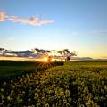 Sunset Glory by Theresa Duong