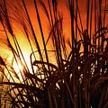 Sunset Grass by Jim Love