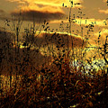 Sunset Grasses by Julie Hamilton