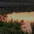 Sunset Heron by Brad Nellis