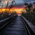 Sunset In Meaher Park #102 by Larry Palmer