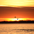 Sunset In Orange by Barbara Treaster