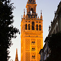 Sunset In Seville - A View Of The Giralda by Andrea Mazzocchetti
