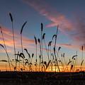 Sunset In The Weeds by Willard Sharp