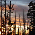 Sunset In Yellowstone by Sadie Dimsey