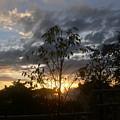 Sunset Leaves 5 by Padamvir Singh