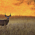 Sunset Lover by Kadek Susanto