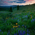 Sunset Meadow Trail by Mike  Dawson