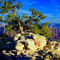 Sunset On The North Rim - Grand Canyon by Sherry Smith