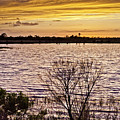 Sunset On The Wetlands by Rob Travis