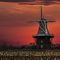 Sunset On Windmill Island by Randall Nyhof