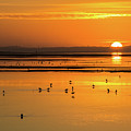 Sunset Over Arcata Marsh, With Avocets by Beth Partin