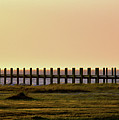 Sunset Over Pamlico Sound by Tom Gari Gallery-Three-Photography